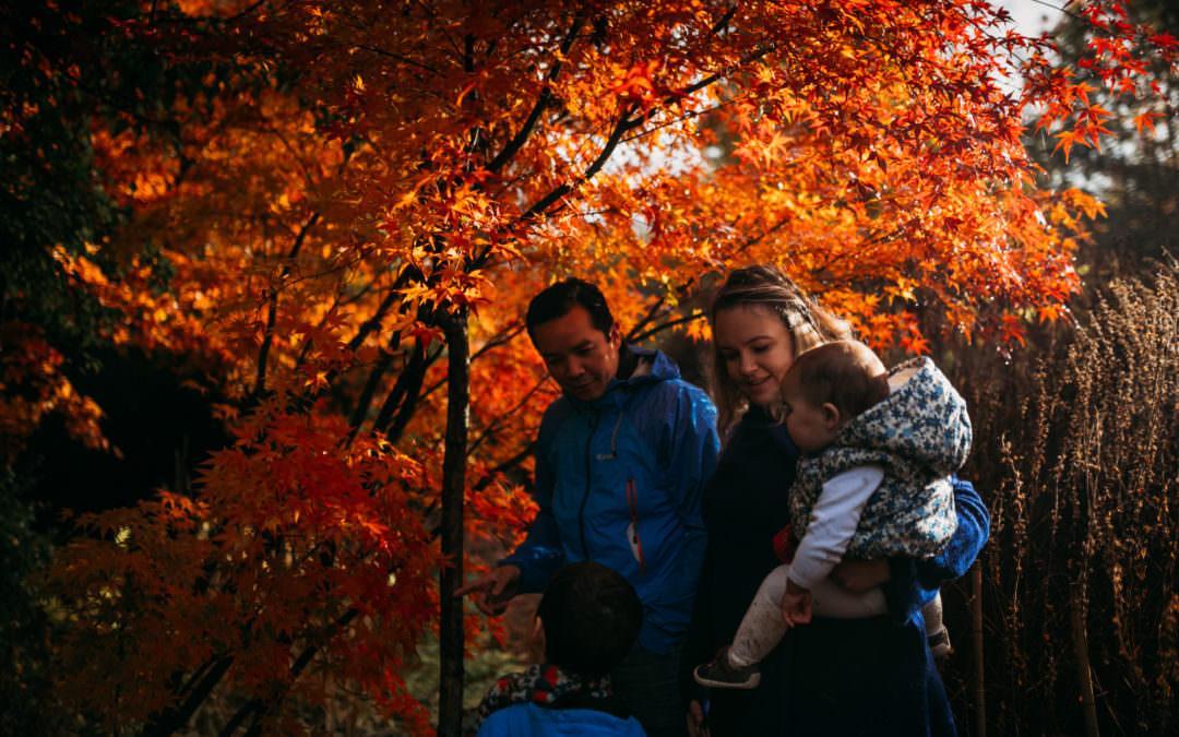 Autumn Colours at Reading University – Harris Gardens
